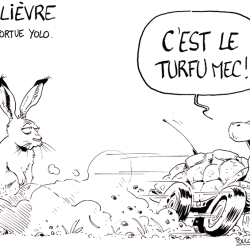 Le lièvre et la tortue yolo LD
